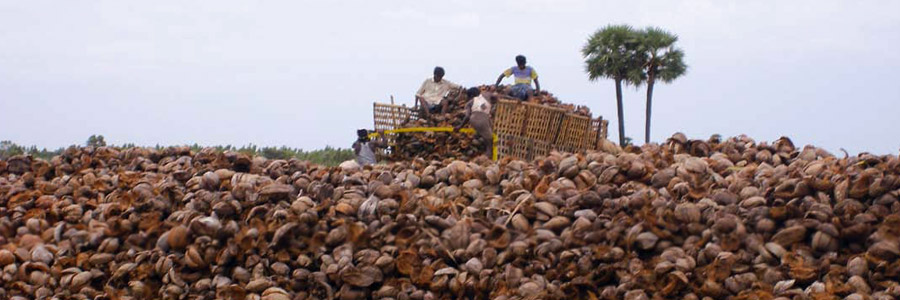 What Does 'Quality COCO Medium' Really Mean?