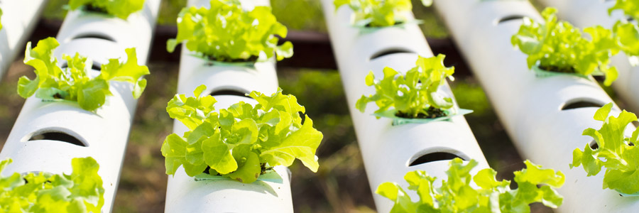 What makes a good-quality soilless growing medium?