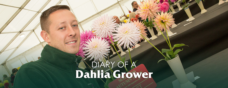 Campaign: Diary of a Dhalia Grower Mark Shepherd