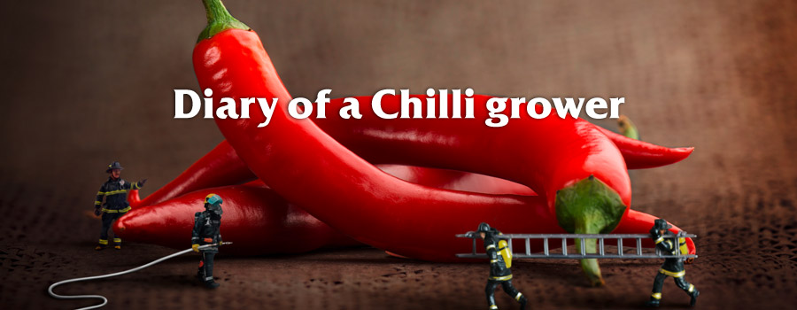 Campaign: Diary of a chilli grower