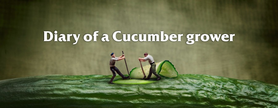Campaign: Diary of a cucumber grower