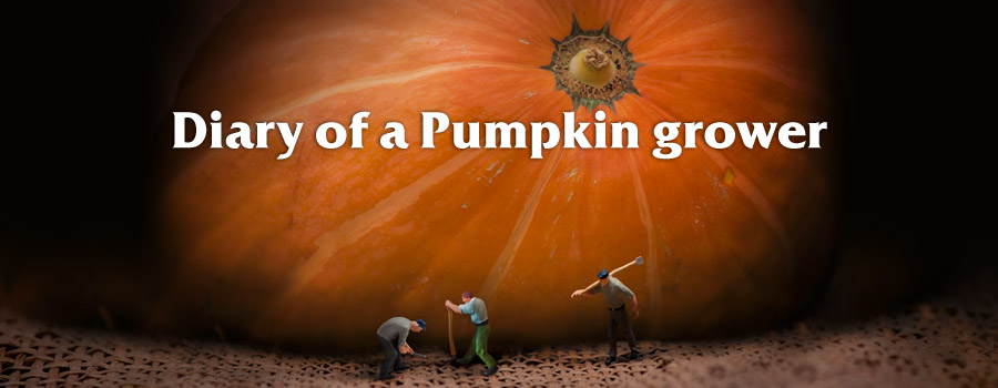 Campaign: Diary of a pumpkin grower