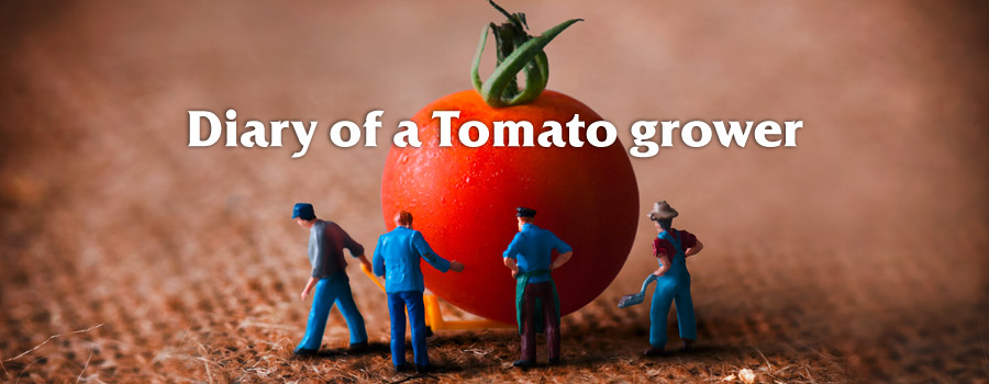 Campaign: Diary of a tomato grower