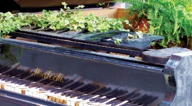 Influence of music on plants