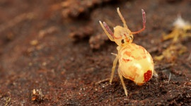 Springtails (Collembola) - Pests & Diseases