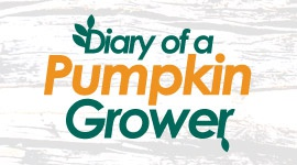 Diary of a pumpkin grower