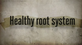 Healthy Root System