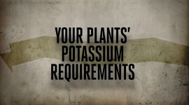Your Plants' Potassium Requirements