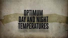 Optimum day and night temperatures