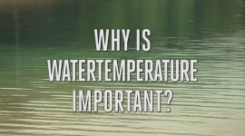 Water temperature for your plants