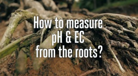 How to measure pH & EC from the roots?