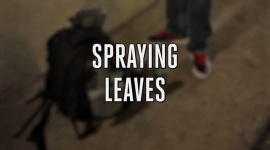 Spraying your plants